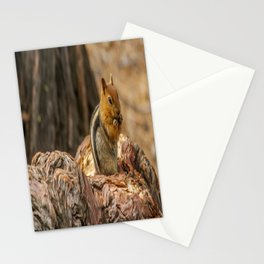 The Squirrel and the Redwood Stationery Cards