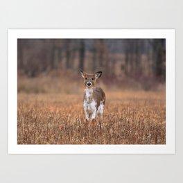 piebald deer Art Print