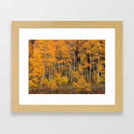 Colorful Idaho Forest Framed Art Print