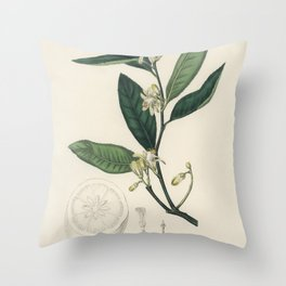 Citron (Citrus medica)  from Medical Botany (1836) by John Stephenson and James Morss Churchill Throw Pillow