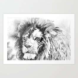 Lion Drawing Art Print