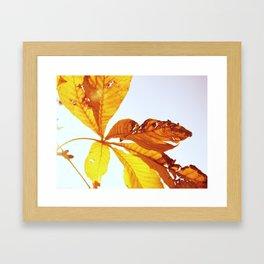 Torn leaves Framed Art Print