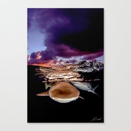 Sunset Shark Split Canvas Print