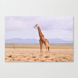 Giraffe on the Serengeti's plains, Tanzania Canvas Print