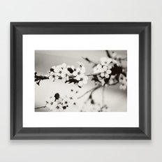 Cherry Blossoms (Black and White) Framed Art Print
