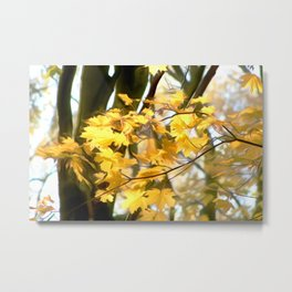 Nature Art For Metal Print