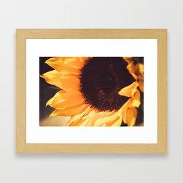 SunFlower (1) Framed Art Print