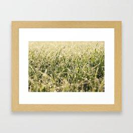 young grass plants, close-up Framed Art Print