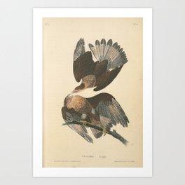 Vintage Print - Birds of America (1840) - Caracara Eagle Art Print