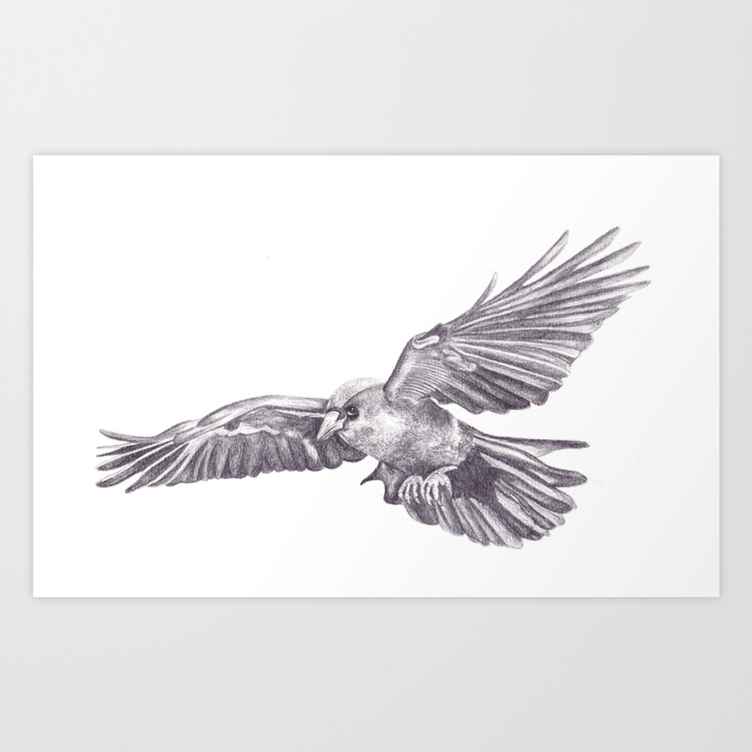 Pencil drawing crow art print