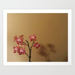 Orchids and Shadows Art Print