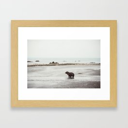 Pup seal crossing the road Framed Art Print