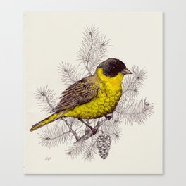 birds Edition Canvas Print