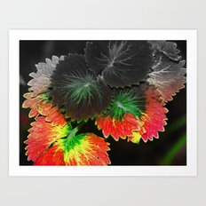 Fall in Summer Art Print
