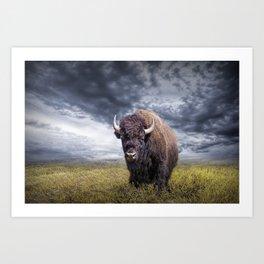 Plains Buffalo on the Prairie Kunstdrucke