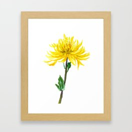 one yellow chrysanthemum Framed Art Print