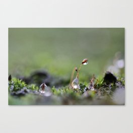 Soggy day Canvas Print