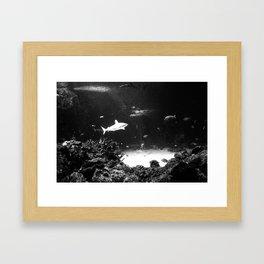 WHITE SHARK Framed Art Print