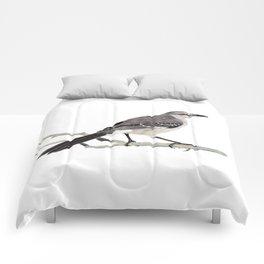 Northern mockingbird - Cenzontle - Mimus polyglottos Comforters