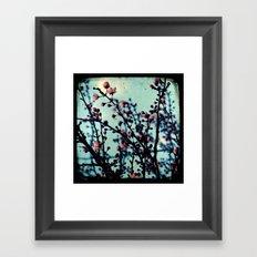 Spring Blossoms - Through The Viewfinder (TTV) Framed Art Print