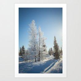 Snowy Tamaracks on a Sunny Day Art Print