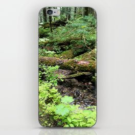 Creek and trunk crossing iPhone Skin