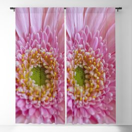 Pink Gerbera Flower in Detail with Yellow Bits Blackout Curtain