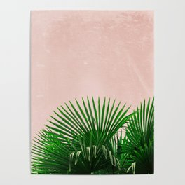Palm Leaves On Pink Background Poster