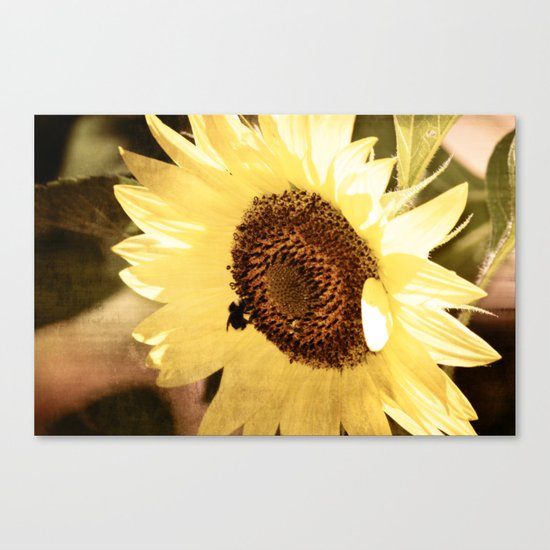Simple Sunflower Canvas Print