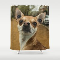 levi Shower Curtains featuring Four eyed Chihuahua?! by Carncross Photography