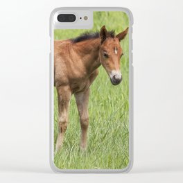 Little Colt Clear iPhone Case