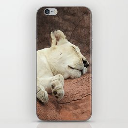 Sleeping Lion iPhone Skin
