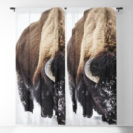 American bison or buffaloes in Yellowstone National Park in the northwest corner of Wyoming Blackout Curtain