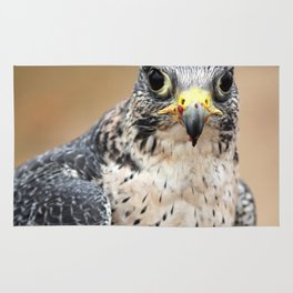 Saker Hawk Rug