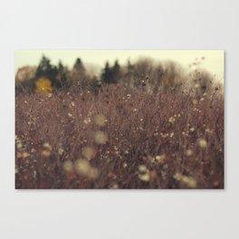 Fields + Fields  Canvas Print