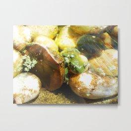 Sunny Frog Metal Print