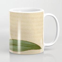 Epidendrum ellipticum (as Epidendrum crassifolium) Curtis' 64 (N.S. 11) pl. 3543 (1837) Coffee Mug