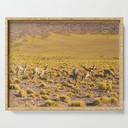 Vicuñas in the Desert, San Pedro de Atacama, Chile Serving Tray
