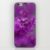 focus iPhone & iPod Skins featuring Focus by Mark Alder