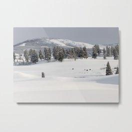 Yellowstone National Park - Blacktail Deer Plateau Panorama Metal Print