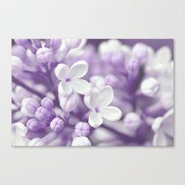 Lilac 167 Canvas Print