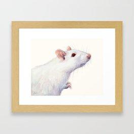 White Rat Watercolor Albino Rat Animal Framed Art Print