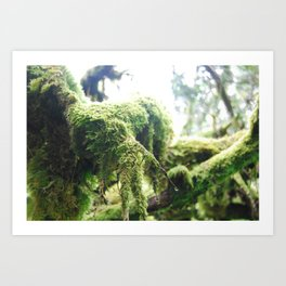 Scottish Moss Art Print