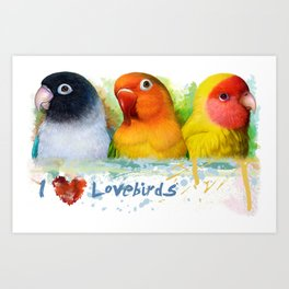 Black Masked Fischer Lutino Peach Faced Lovebird Realistic Painting Art Print