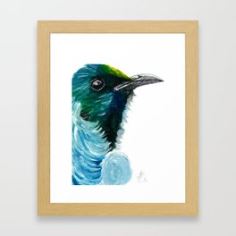 New Zealand Colorful Tui Bird Framed Art Print
