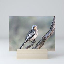 Hornbill Mini Art Print