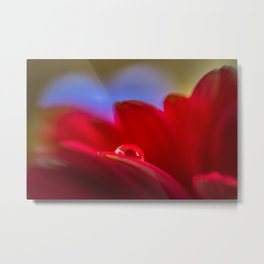 Simply Put water droplet on a Gerber Daisy Metal Print