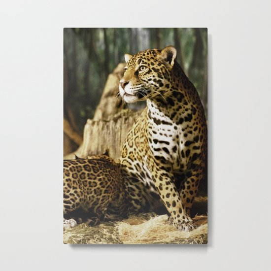 Female Jaguar, Stella Metal Print