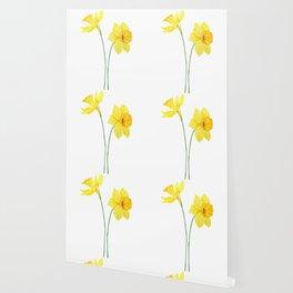 two botanical yellow daffodils watercolor Wallpaper