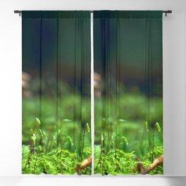 Moss Macro Close Up Blackout Curtain